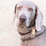 Scaldacollo for Dog